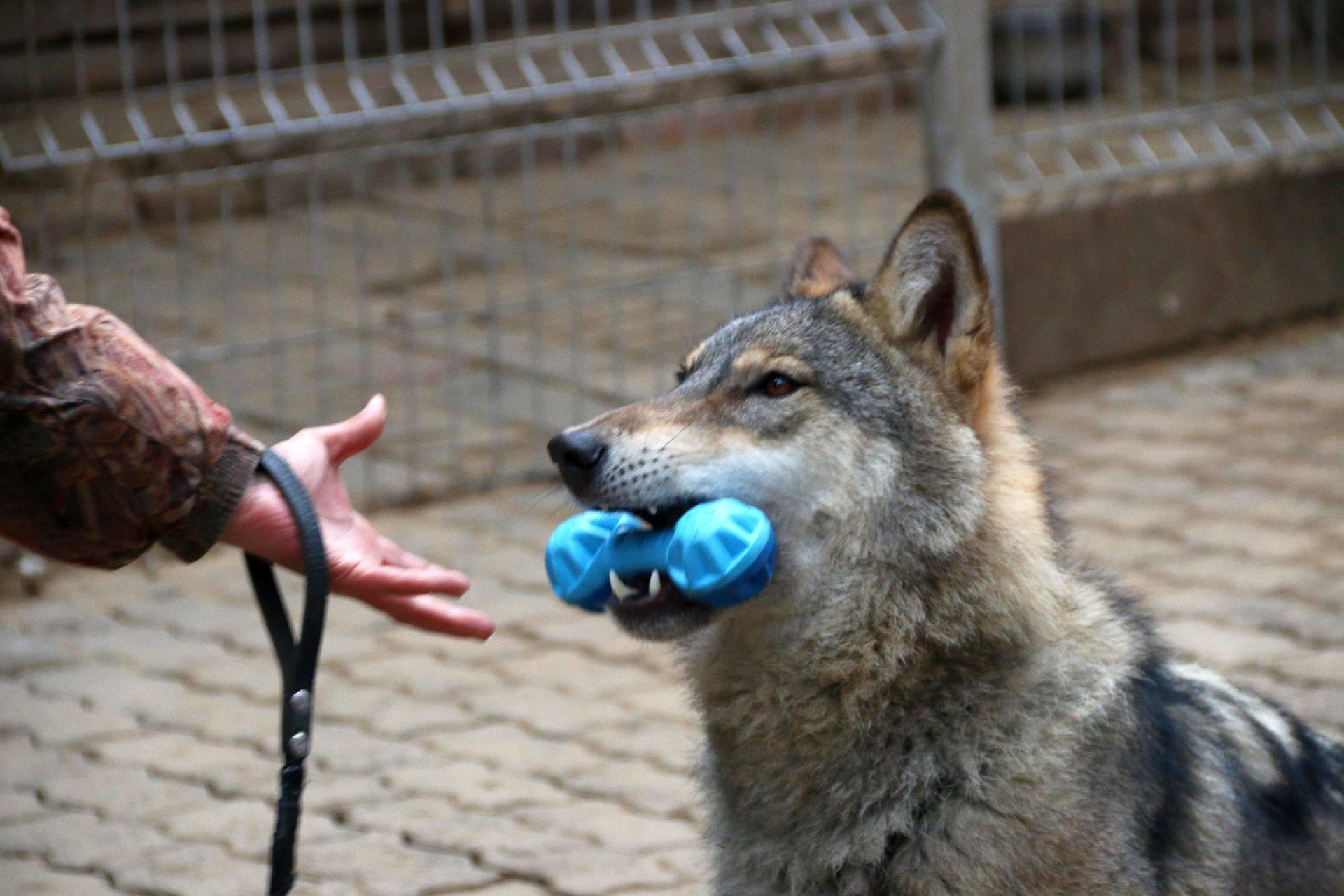 Дом Волка приглашает!